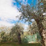 picc_pietra-2421_1500